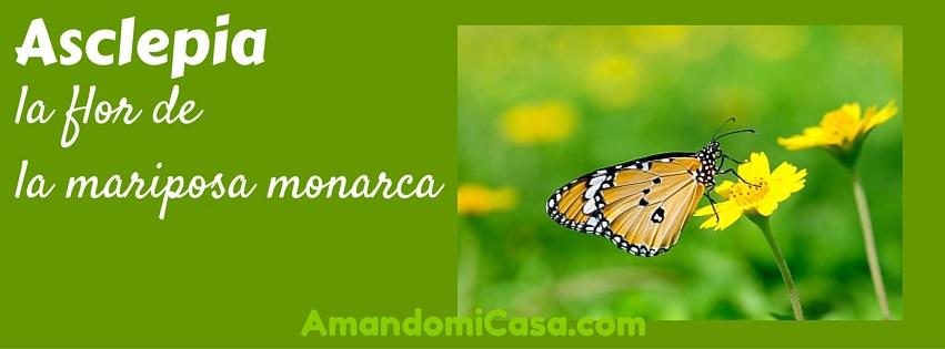 Asclepia la flor de la mariposa monarca