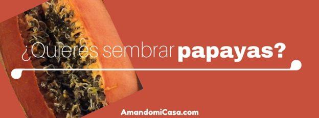Sembrar papayas