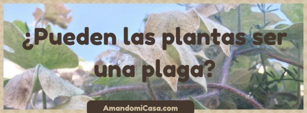 Pueden las plantas ser plagas